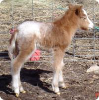 CR Apache Fire Dance X Little Americas X Easter Lady
